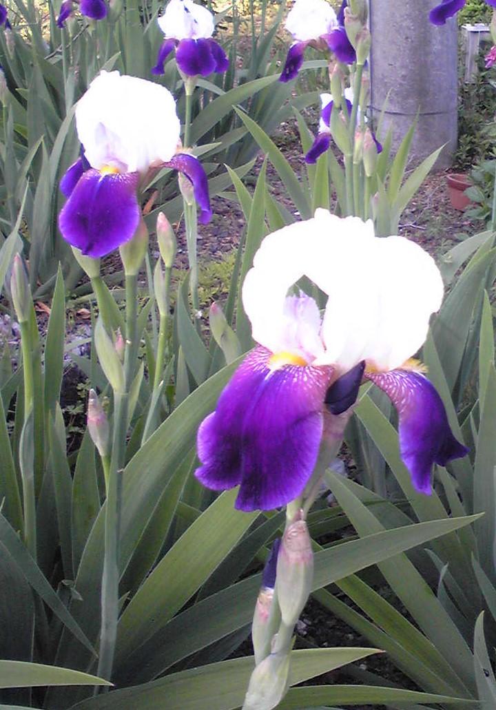 青梅の新緑と花々のイメージ
