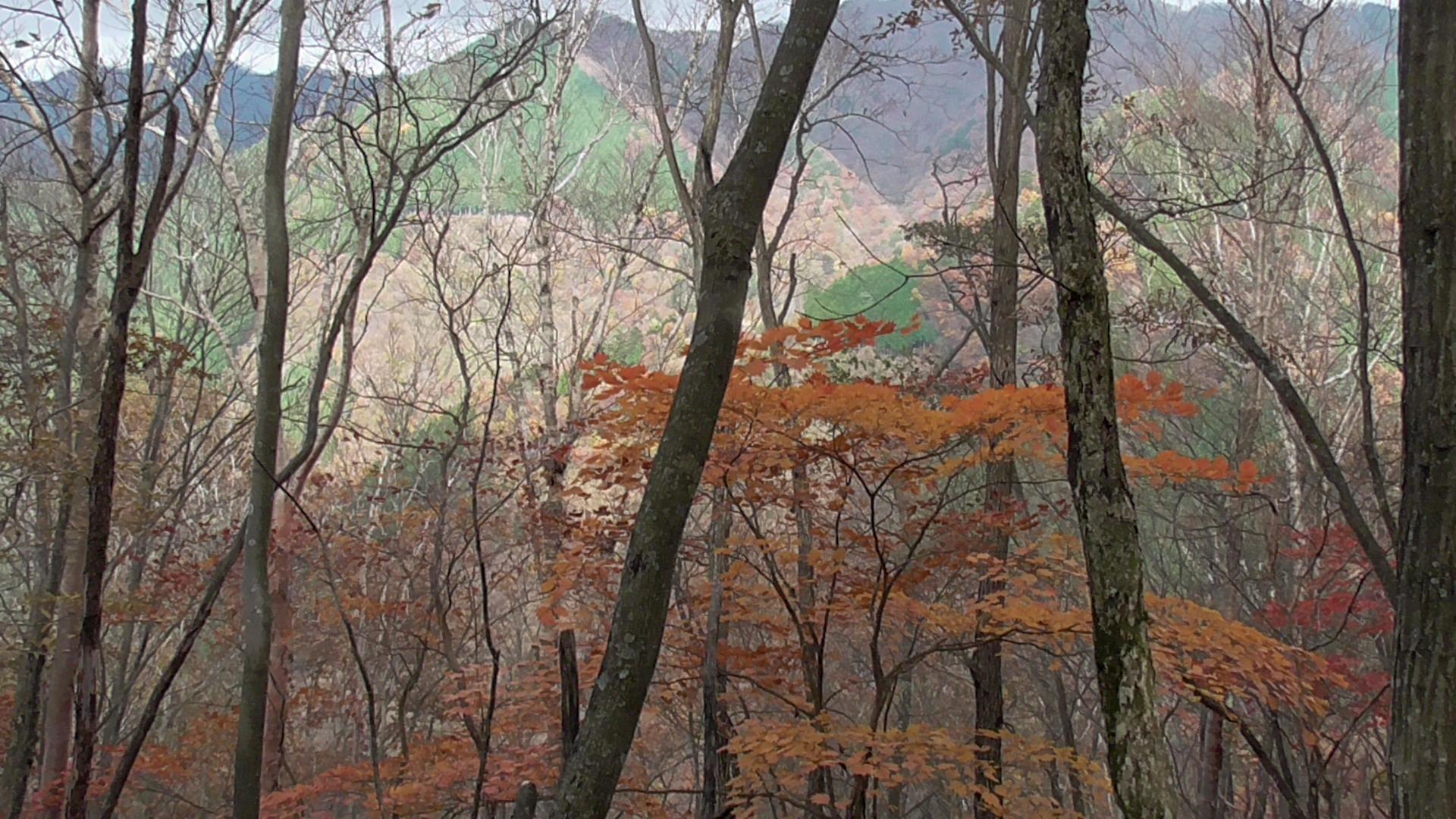 青梅・奥多摩の紅葉スポットのイメージ